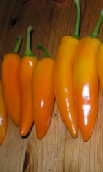 Chili Tequila Sunrise - Capsicum ?
